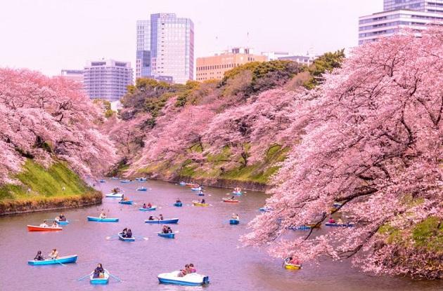 Khám phá những lễ hội mùa xuân hấp dẫn ở Tokyo