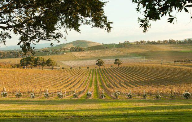 Thung lũng Yarra - nơi sản xuất rượu vang ngon trứ danh