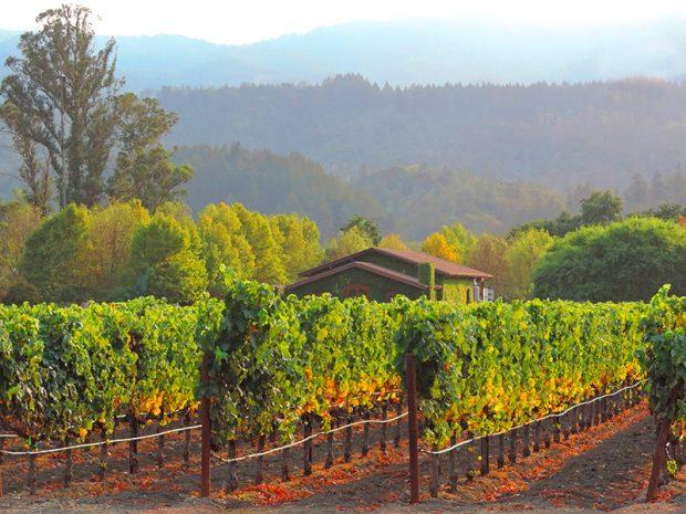 Thung lũng rượu vang Napa